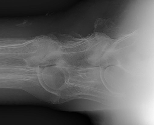 veterinary radiography image